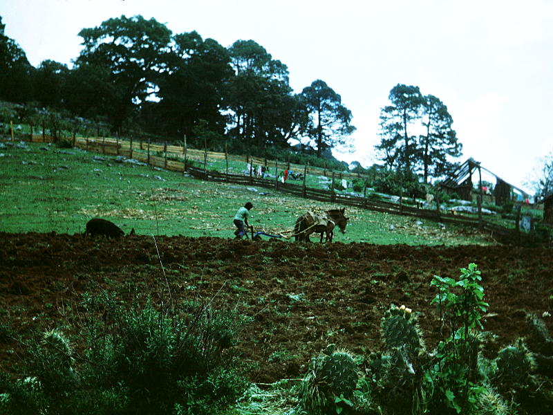A bit of agriculture supplements forestry as a way of life in ejido Conrado Castillo. Photo: Andy.